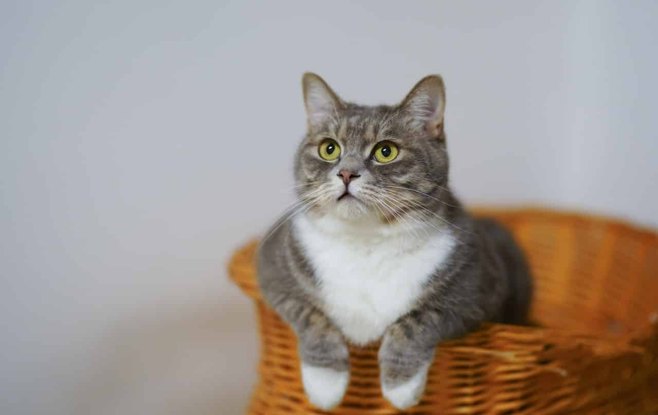 Do and don'ts of owning a cat for the first time?